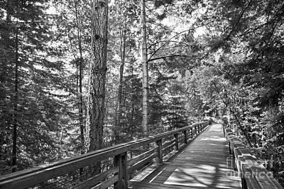 University Of California Photograph - University Of California Santa Cruz Walkway by University Icons
