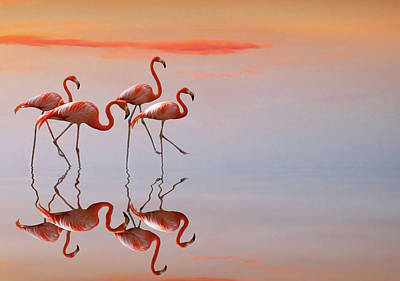 Flamingos Photograph - Untitled by Anna Cseresnjes
