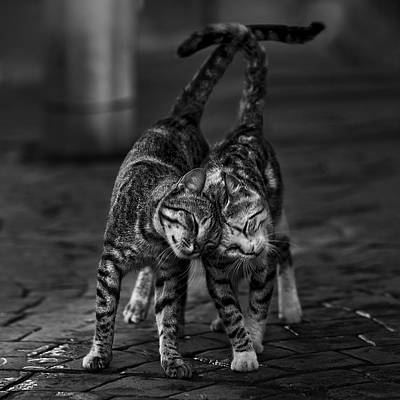 Tail Photograph - Untitled by Nebula