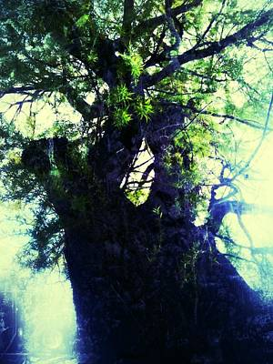 Untitled -tree Star Print by Juliann Sweet