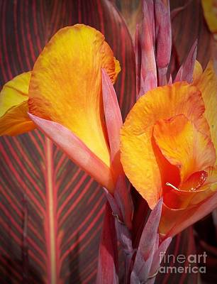 Up Close And Personal Print by Chalet Roome-Rigdon