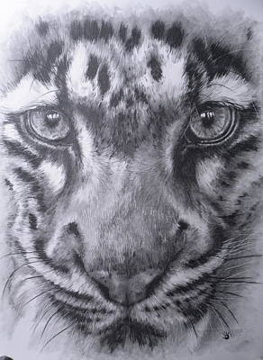 Up Close Clouded Leopard Print by Barbara Keith