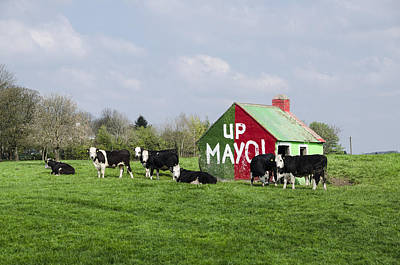 Cow Digital Art - Up Mayo by Bill Cannon