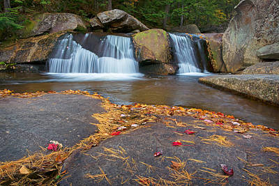Pine Needles Photograph - Upper Screwauger Falls by Darylann Leonard Photography