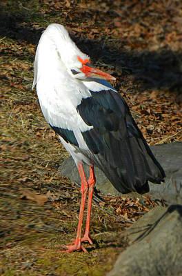 Stork Digital Art - Upside Down View by Emmy Marie Vickers