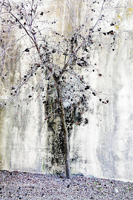 Twiggy Photograph - Urban Oak Tree by Pamela Patch