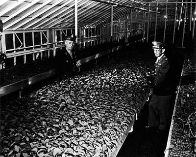 1943 Photograph - Us Army Malaria Drug Production by National Library Of Medicine