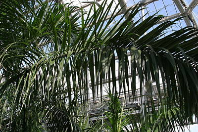 House Photograph - Us Botanic Garden - 121216 by DC Photographer