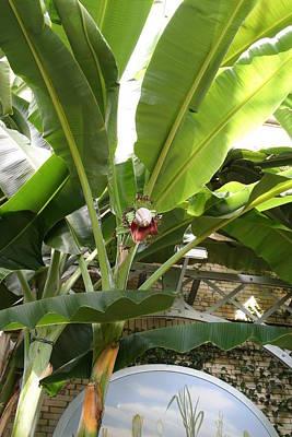Botanic Photograph - Us Botanic Garden - 12122 by DC Photographer