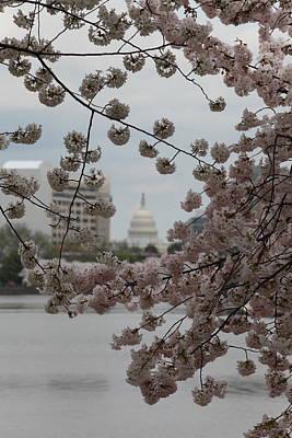 Us Capitol - Cherry Blossoms - Washington Dc - 01132 Print by DC Photographer