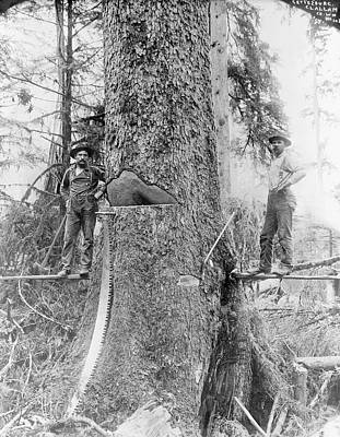 Us Forestry Print by Library Of Congress