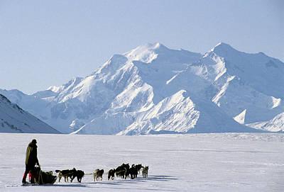 Usa, Alaska, Sled Dogs, Park Ranger Print by Gerry Reynolds