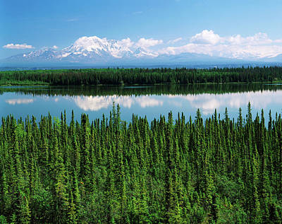 Usa, Alaska, Willow Lake And Mt Print by Adam Jones