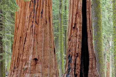 Usa, California, Sequoia National Park Print by Jaynes Gallery