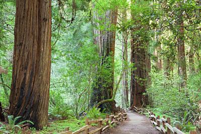 Split Rail Fence Photograph - Usa, California Trail Through Muir by Jaynes Gallery