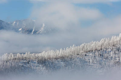 Usa, Colorado Hoarfrost Coats The Trees Print by Jaynes Gallery