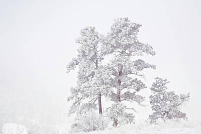 Ute Photograph - Usa, Colorado, Ute Pass by Jaynes Gallery