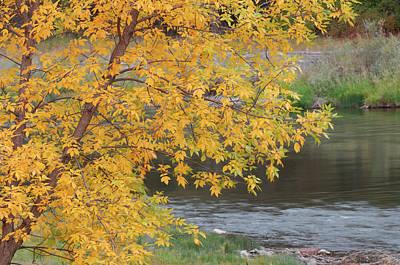 Salmon River Photograph - Usa, Idaho, Salmon River, Fall by Gerry Reynolds
