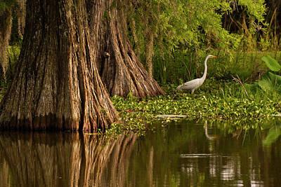 Lake Martin Photograph - Usa, Louisiana, Lake Martin by Jaynes Gallery