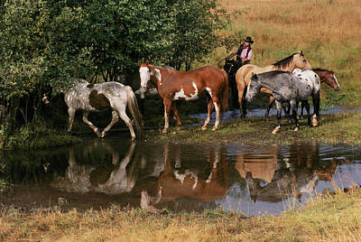 Usa, Montana Horses Tended By Cowgirl Print by Jaynes Gallery
