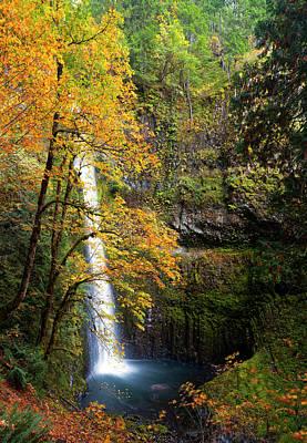Usa, Oregon A Bigleaf Maple (acer Print by Gary Luhm