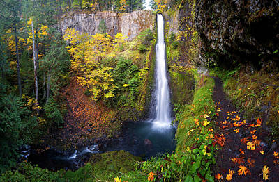 Usa, Oregon A Bigleaf Maple Leaves Print by Gary Luhm
