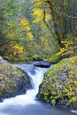 Usa, Oregon Bigleaf Maple (acer Print by Gary Luhm
