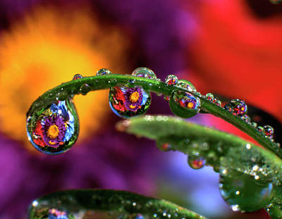 Striking Photograph - Usa, Oregon, Close-up Abstract by Jaynes Gallery