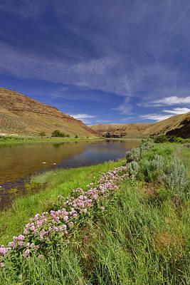 Milkweed Photograph - Usa, Oregon Milkweed Along The John Day by Jaynes Gallery