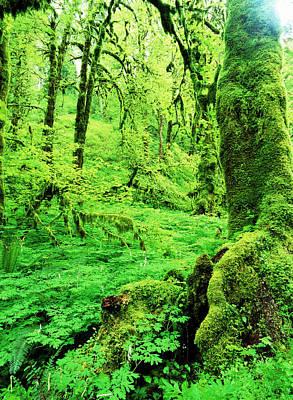 Usa, Oregon, View Of Lush Trees Print by Stuart Westmorland