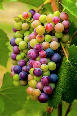 Pinot Photograph - Usa, Washington, Okanogan Valley by Richard Duval