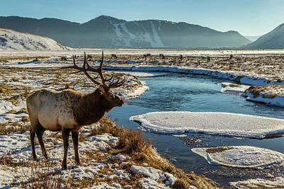 Usa, Wyoming, National Elk Refuge Print by Jaynes Gallery