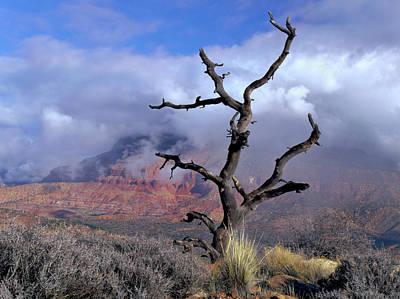 Zion National Park Photograph - Utah Usa Pinyon Pine Snag Above Virgin by Scott T. Smith