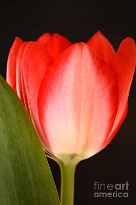 Simple Beauty In Colors Photograph - Valentine by Deb Halloran