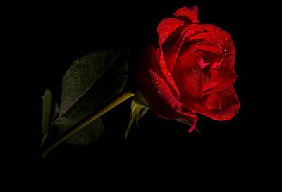 Valentine's Day Velvet Rose Original by Eduard Moldoveanu