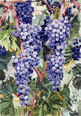 Valley Vines Print by Gael Graysen