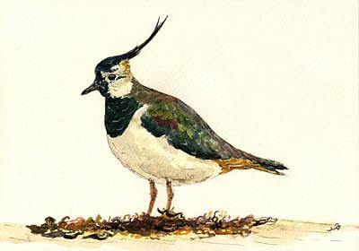 Lapwing Painting - Vanellus Vanellus by Juan  Bosco