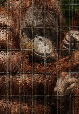 Orangutan Digital Art - Vanishing Cage by Jack Zulli