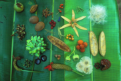 Variety Of Seeds And Fruits Print by Christian Ziegler