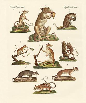 Marsupial Drawing - Various Kinds Of Marsupials by Splendid Art Prints