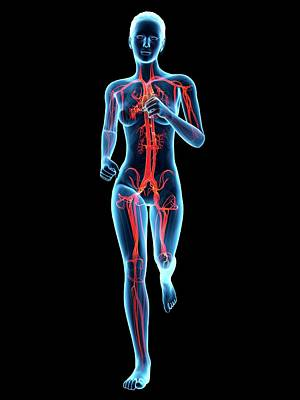 Jogging Photograph - Vascular System Of A Runner by Sebastian Kaulitzki
