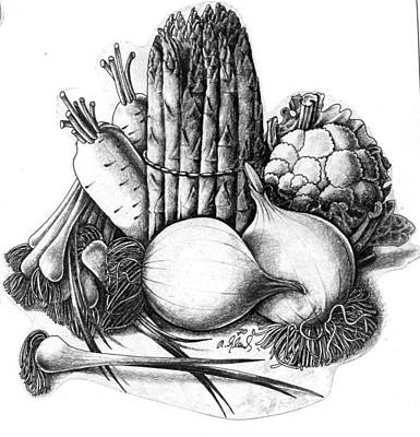 Cauliflower Drawing - Vegetables by Arthur Glendinning