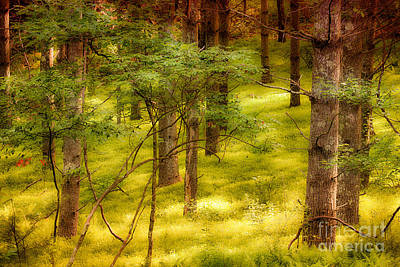 Velvet Forest - Blue Ridge Parkway Print by Dan Carmichael