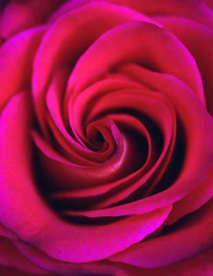 Floral Photograph - Velvet Rose by Kathy Yates