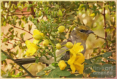 Arizonia Photograph - Verdin by Elizabeth Winter