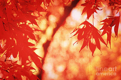 Vermillion Maple Leaves With Vintage Touch Print by Beverly Claire Kaiya