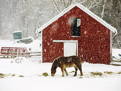 Red Barn. New England Photograph - Vermont Christmas Eve Snowstorm by Edward Fielding