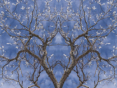 Vermont Winter Mirror Trees Snow Sky Print by Andy Gimino