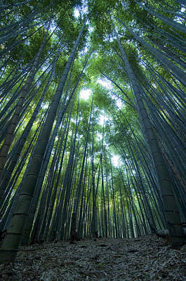 Bamboo Forest Photograph - Vertical Bamboo Forest by Aaron S Bedell