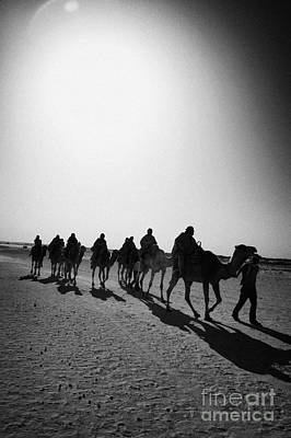 Camel Photograph - vertical hot sun beating down on sands and camel train in the sahara desert at Douz Tunisia by Joe Fox
